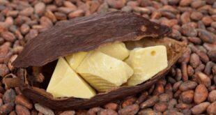 Названы полезные свойства масла какао